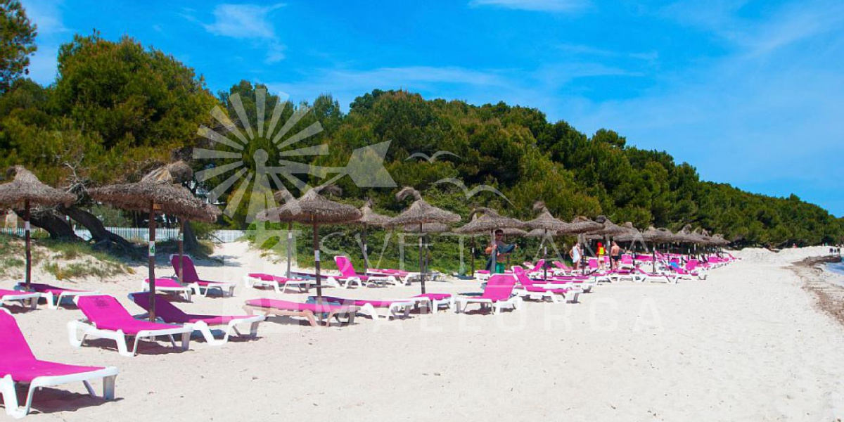 The beach in Alcudia .